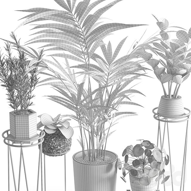 Houseplant 39