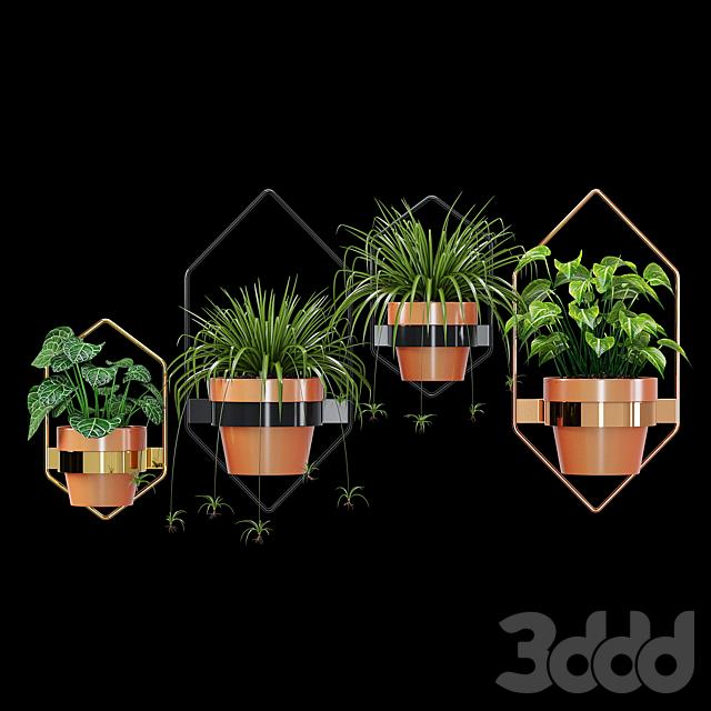 Wall planters hexagon