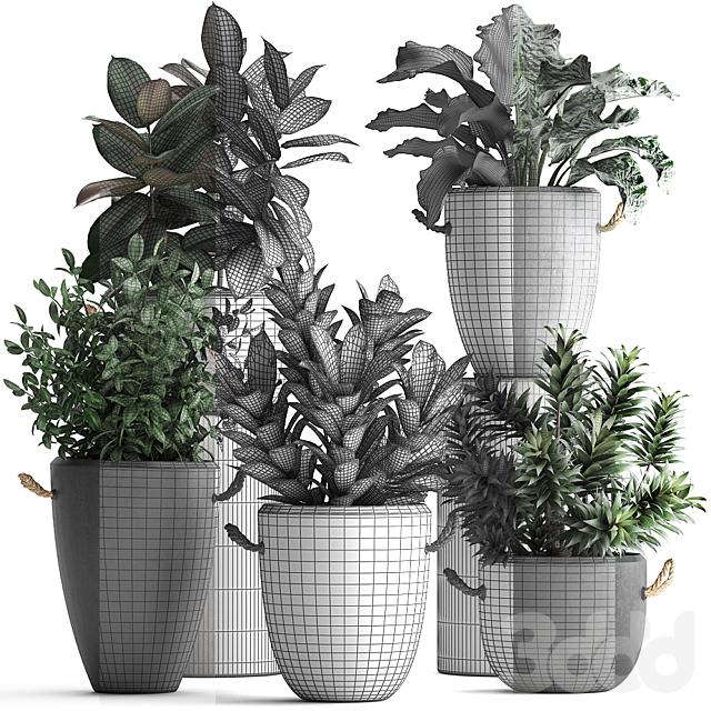 Коллекция растений 393.