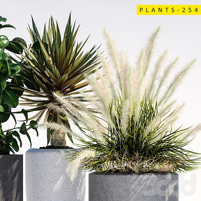 plants 254