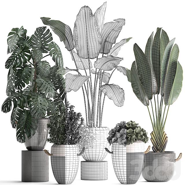 Коллекция растений 396.