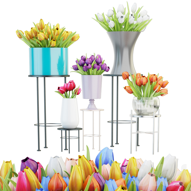 Collection of tulips
