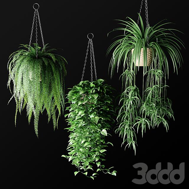 Plants in hanging wicker planters | Растения в подвесных плетёных кашпо