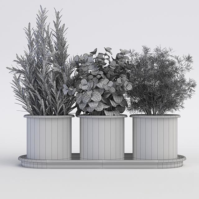 Кухонные растения в горшках Orla Kiely Herb Pots