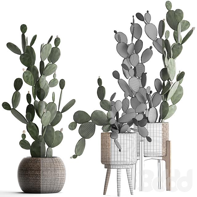 Коллекция растений 397.