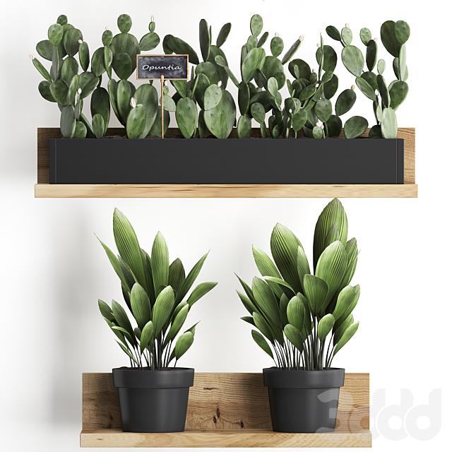 Коллекция растений 398.