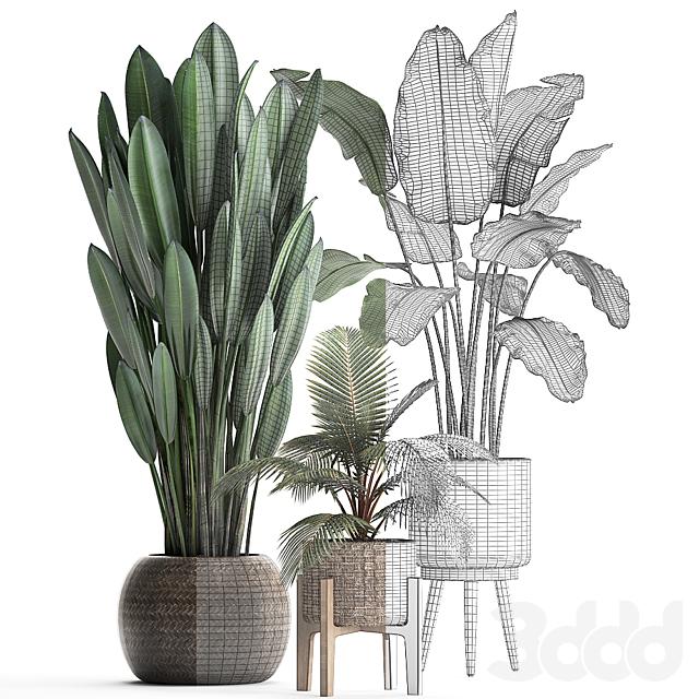Коллекция растений 400.