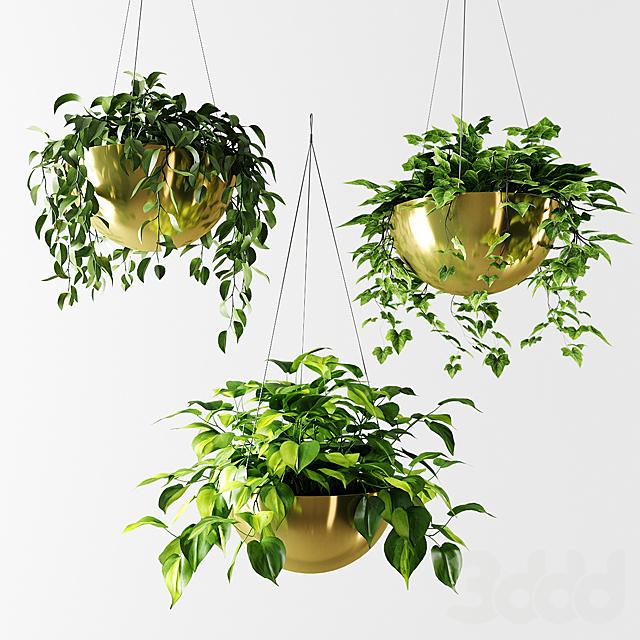 Ампельные растения в позолоченных кашпо