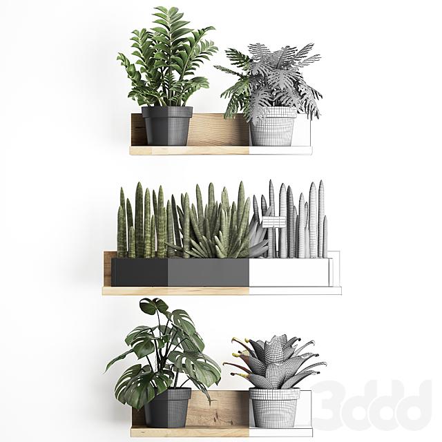 Коллекция растений 401.