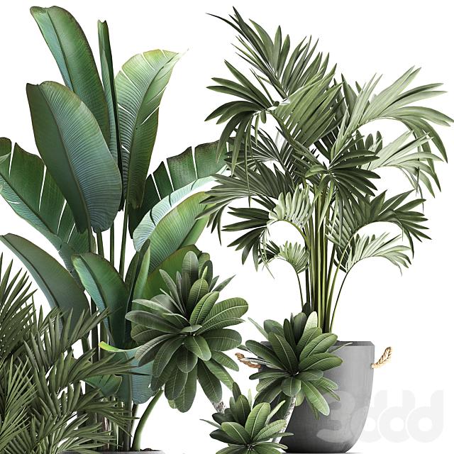 Коллекция растений 402.