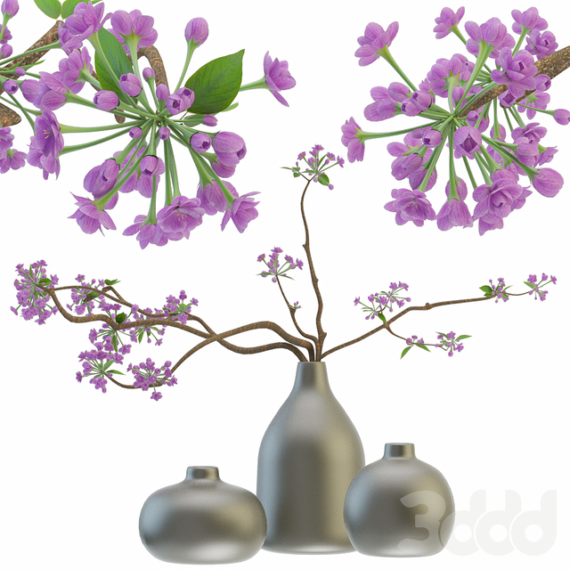 Blooming sakura branches in a vase