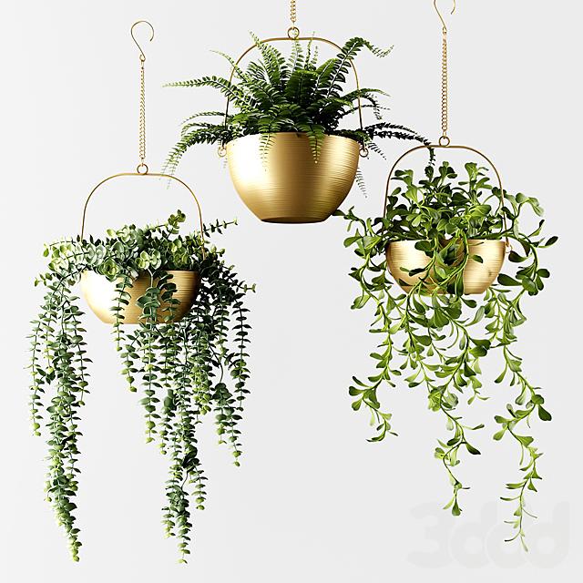 Ампельные растения в бронзовых кашпо   Ampel plants in bronze flower pots