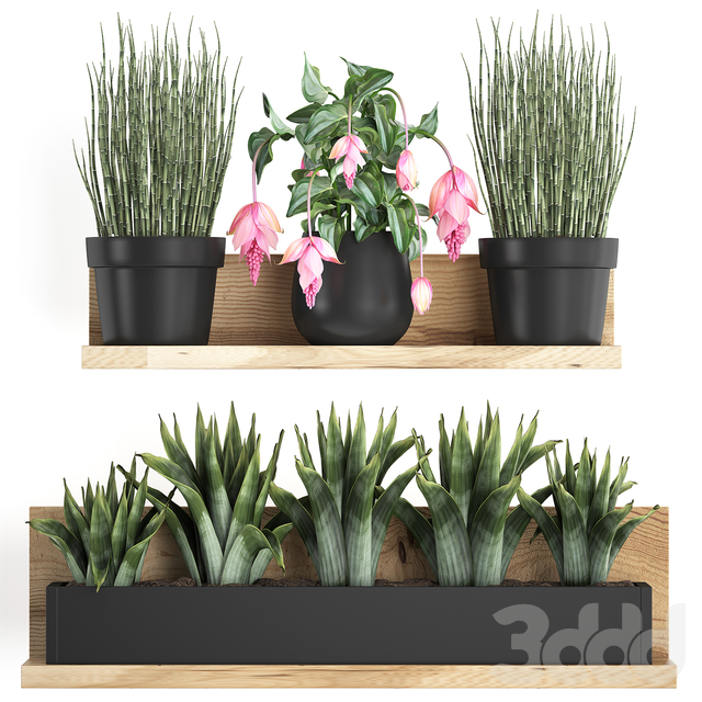 Коллекция растений 404.