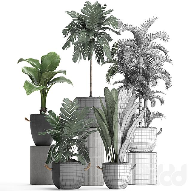 Коллекция растений 405.