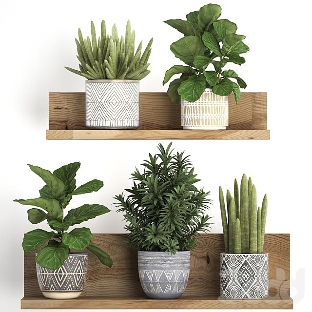 Коллекция растений 407.
