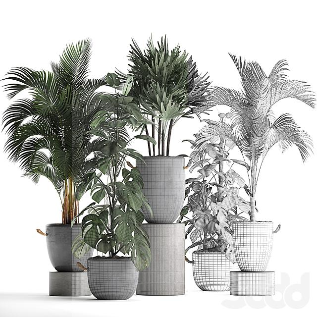 Коллекция растений 408.