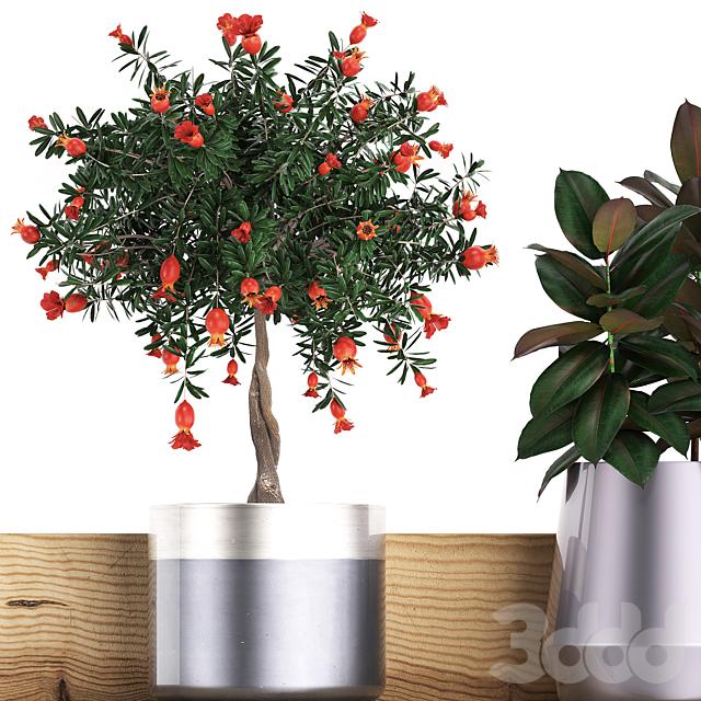 Коллекция растений 409.
