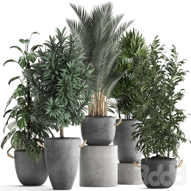 Коллекция растений 413.