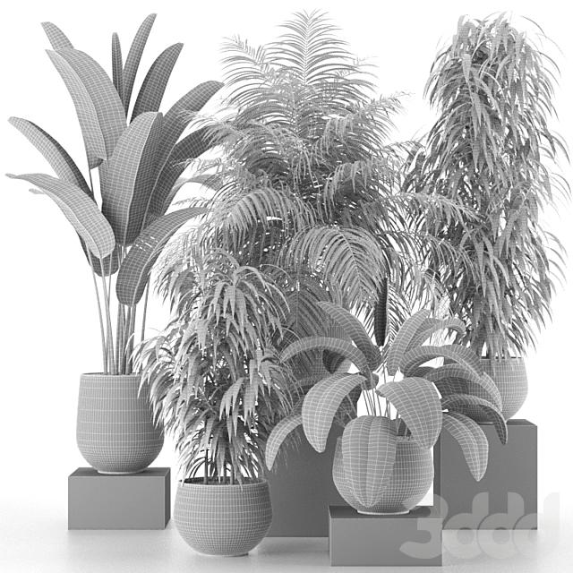 Коллекция комнатных растений 04