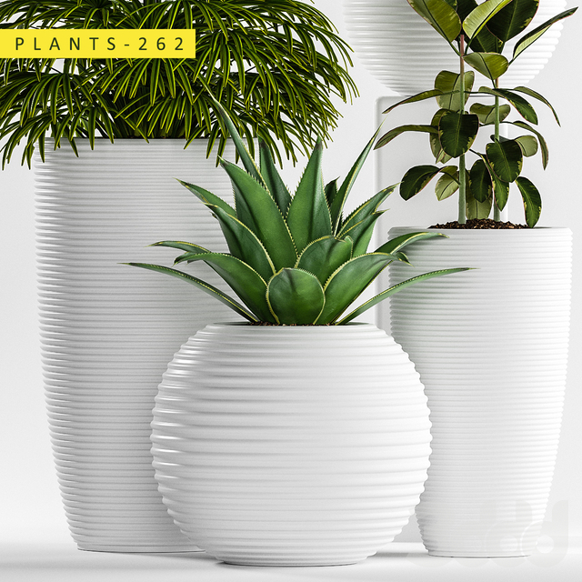 plants 262