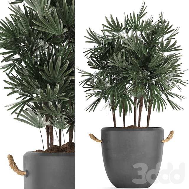 Коллекция растений 414.