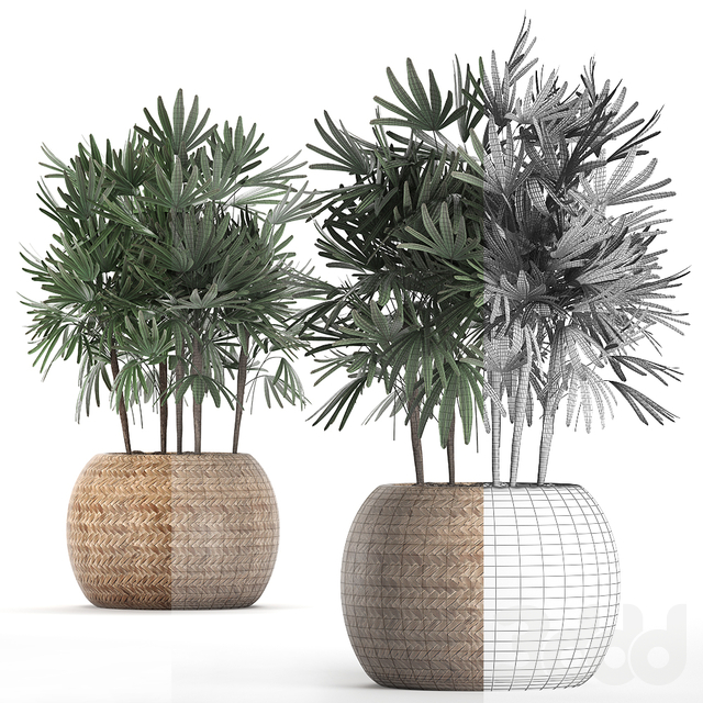 Коллекция растений 416.