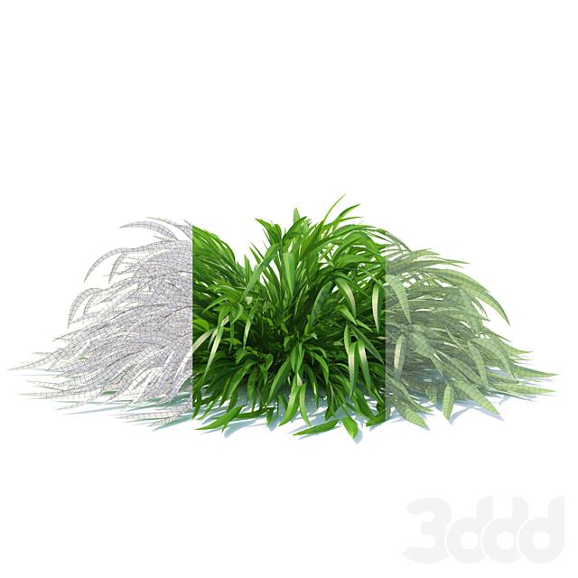 Хаконехлоа японская трава | Hakonechloa macra Naomi