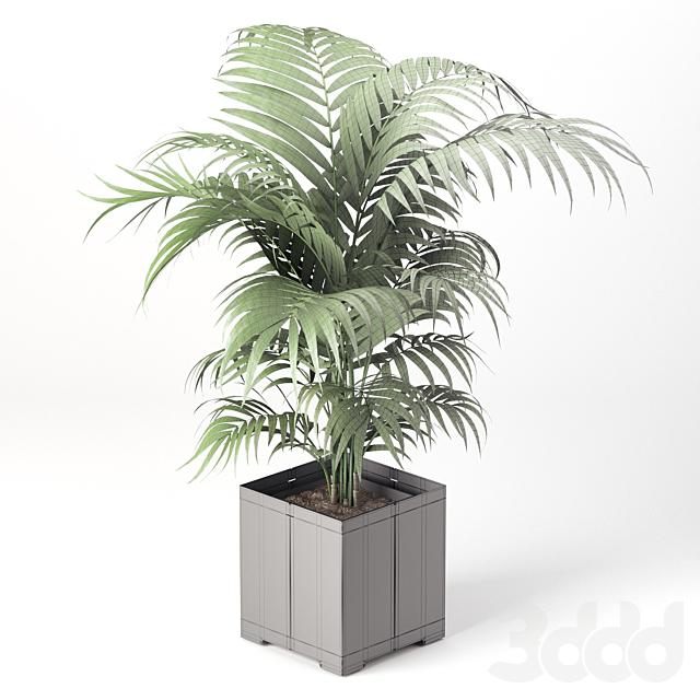 Пальма в горшке (Коллекция CAPE)