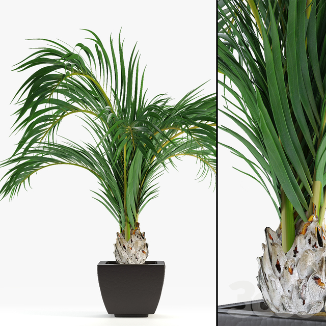 Realistic Palm Garden