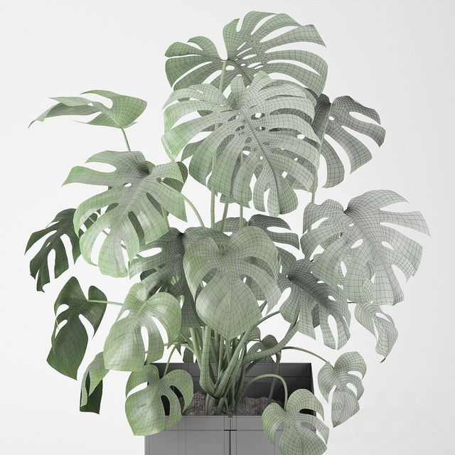 Monstera in a pot 04 (CAPE Collection)