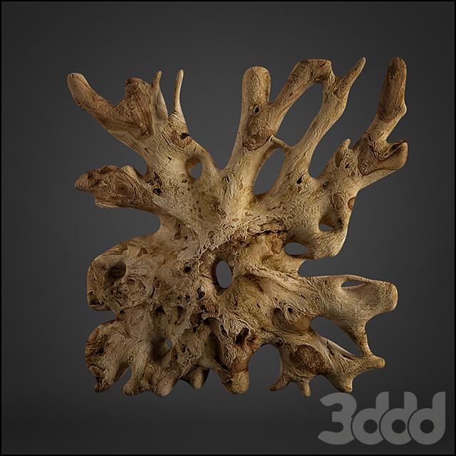 teak root
