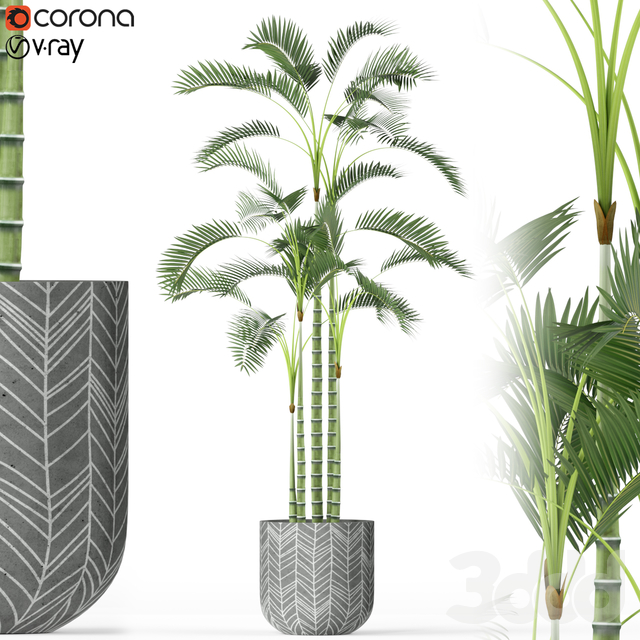 Plants collection 214