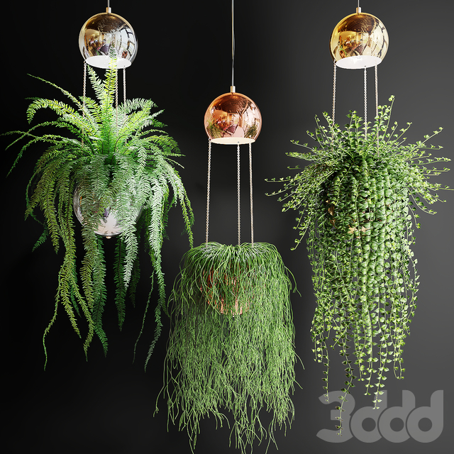 Ампельные растения в шарах кашпо со светильниками