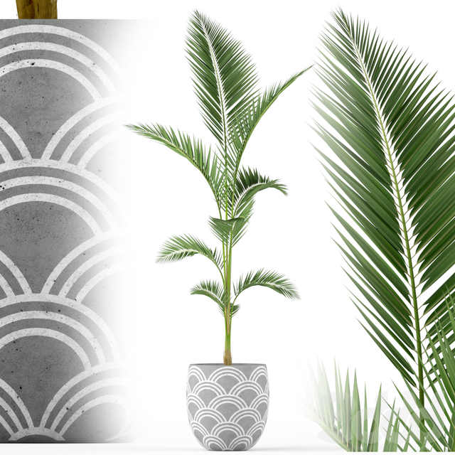Plants collection 217