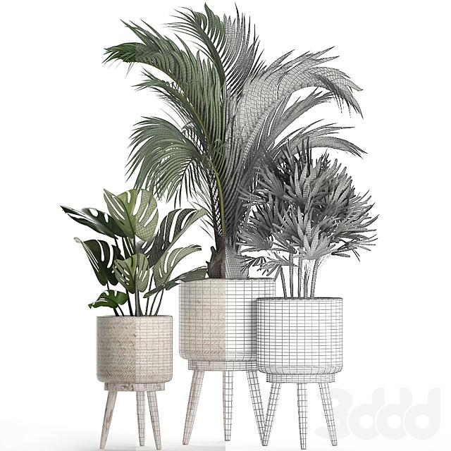 Коллекция растений 427.