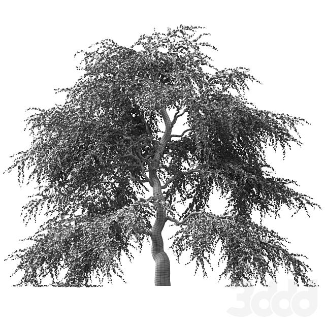 Дерево Сакуры v2