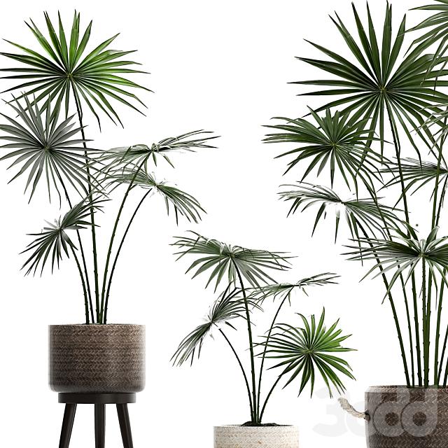 Коллекция растений 429.
