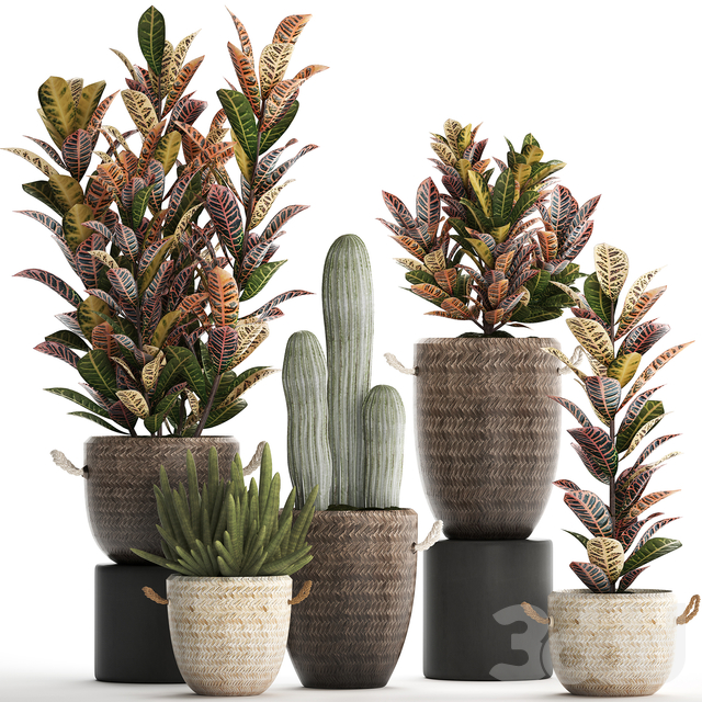 Коллекция растений 430.