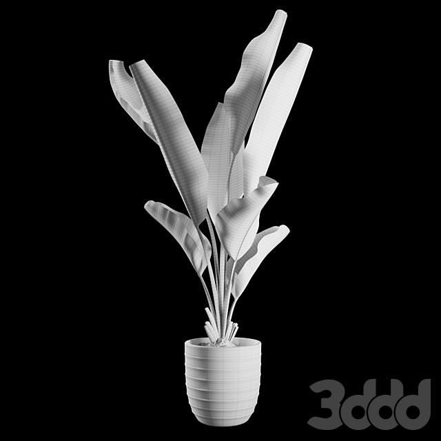 Indoor Plants Set 01
