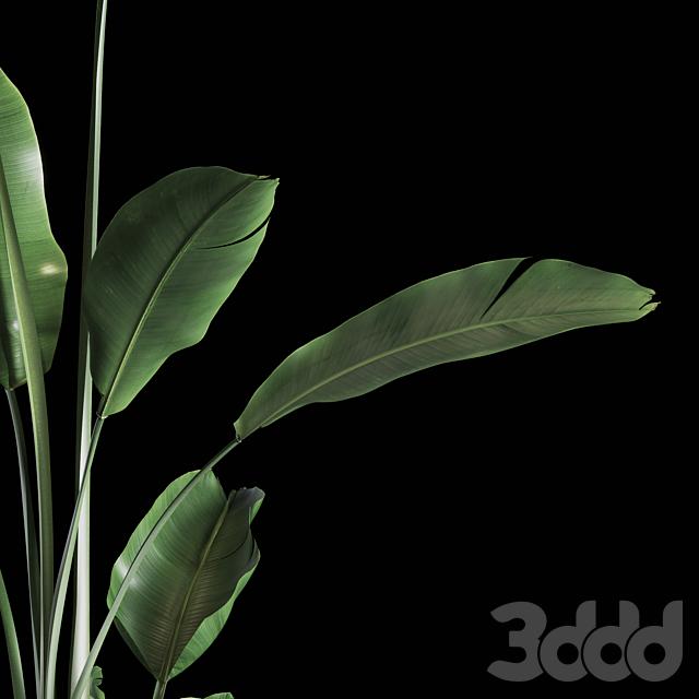 Indoor Plants Set 03