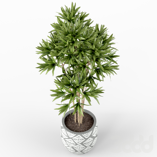 Plants collection 223
