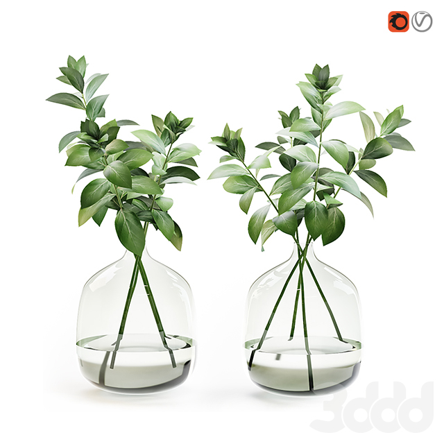 Herb stem in a vase with water