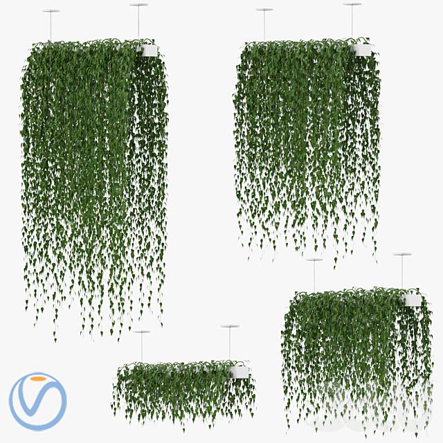 Hanging plants v1  (Vray)