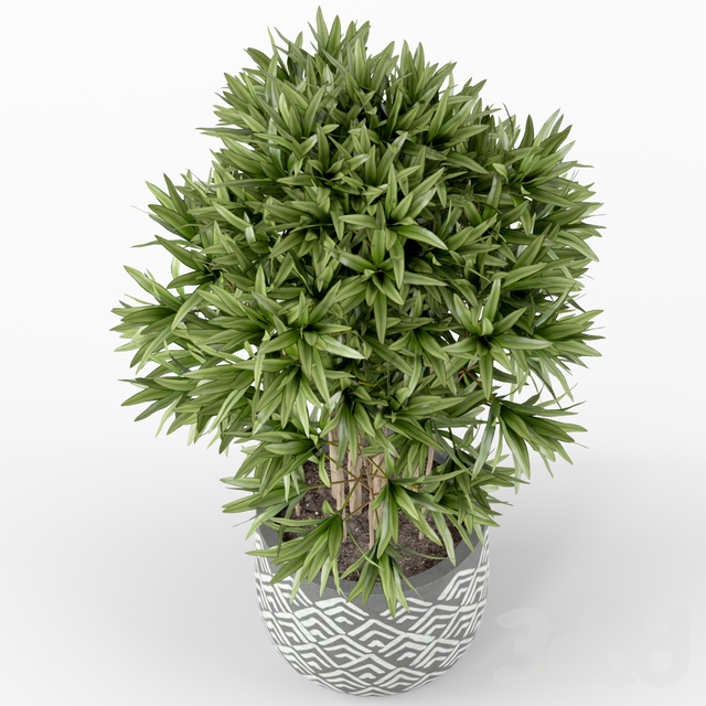 Plants collection 224