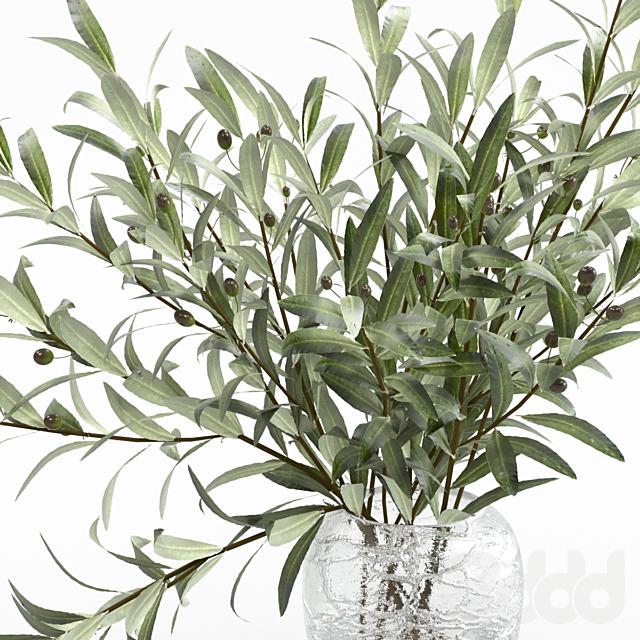 Оливковые ветви в вазе