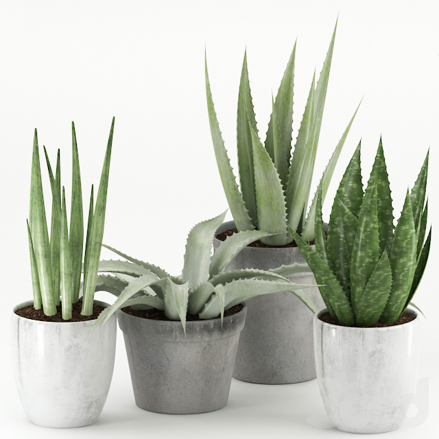 Plants 167
