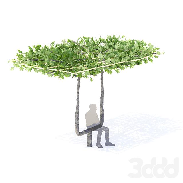 Платан кленолистный крыша | Platanus x acerifolia