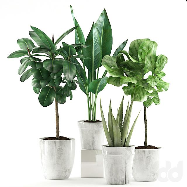 Plants 168