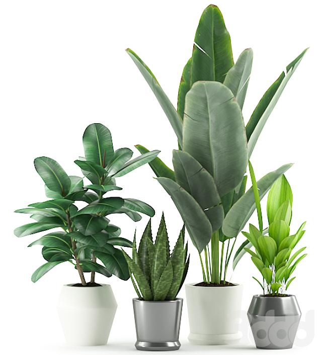 Plants 169