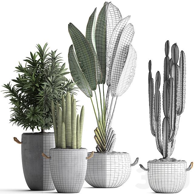 Коллекция растений 434.